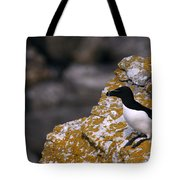 Razorbill Bird Tote Bag
