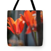 Reaching For Late Morning Sun Tote Bag