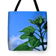 Reaching For Sunlight Tote Bag