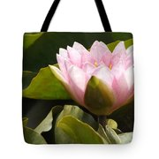 Reaching Lily Tote Bag