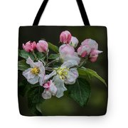 Reaching Sunlight Tote Bag