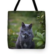 Really Now Tote Bag