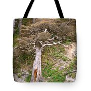 Rebirth On The Coast Tote Bag