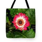 Red And White Gerber Daisy Tote Bag