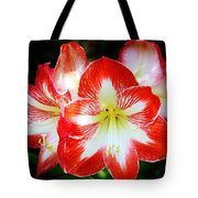 Red And White Amaryllis Tote Bag