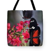 Red And White Longwing Butterflies  Tote Bag