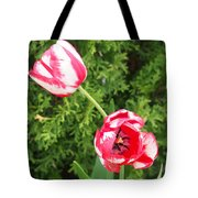 Red And White Tulips Tote Bag