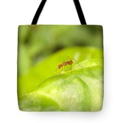 Red Ant On Green Leaf Tote Bag