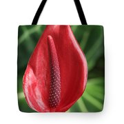 Red Anthurium #2 Tote Bag