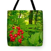 Red Baneberry Along Rivier Du Nord Trail In The Laurentians-qc Tote Bag