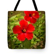 Red - Beautiful Hibiscus Flowers In Bloom On The Island Of Maui. Tote Bag