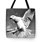 Red Billed Seagull In Black And White Tote Bag