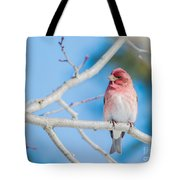 Red Bird Blue Sky Warm Sun Tote Bag