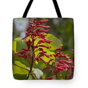Red Buckeye - Aesculus Pavia - Wildflowers Tote Bag