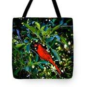 Red Cardinal 1 Tote Bag