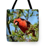 Red Cardinal In Springtime Tote Bag