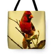 Red Cardinal No. 2 - Kauai - Hawaii Tote Bag