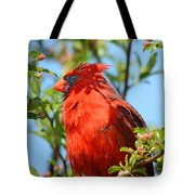 Red Cardinal Pink Blooms Tote Bag