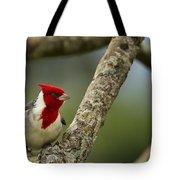 Red Crested Cardinal Tote Bag by Belinda Greb