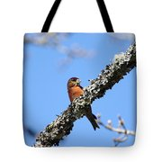 Red Crossbill Finch Tote Bag