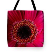 Red Daisy Close Up Tote Bag