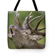 Red Deer Cervus Elaphus Stag Bugling Tote Bag