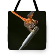 Red Dragonfly On An Antenna Tote Bag
