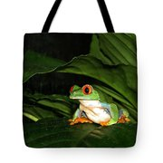 Red Eyed Green Tree Frog Tote Bag