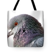 Red-eyed Pigeon Tote Bag