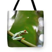 Red Eyed Tree Frog, Agalychnis Tote Bag