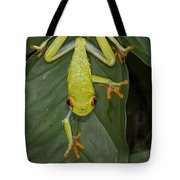 Red-eyed Tree Frog Costa Rica Tote Bag