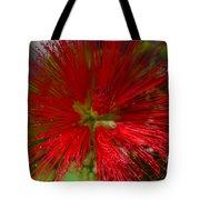 Red Fairy Duster Calliandra Californica Tote Bag