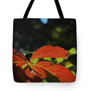 Red Fall Leaves Close Up Tote Bag