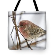 Red Finch Tote Bag