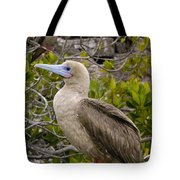 Red-footed Booby Galapagos Islands Tote Bag