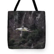 Red Footed Booby In Flight Tote Bag