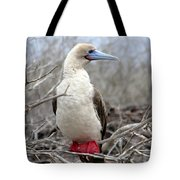 Red-footed Booby Tote Bag