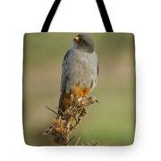Red Footed Falcon Falco Vespertinus 1 Tote Bag