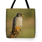 Red Footed Falcon Falco Vespertinus 4 Tote Bag