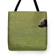 Red Fox  And Grizzly Bear Tote Bag