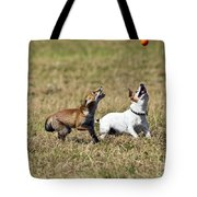 Red Fox Cub And Jack Russell Playing Tote Bag by Brian Bevan