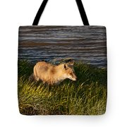 Red Fox Hunting The Edges At Sunset Tote Bag