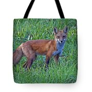 Red Fox In A Field Tote Bag