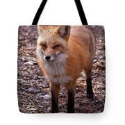 Red Fox In Prospect Park Tote Bag