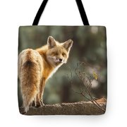 Red Fox In The Sunset Tote Bag