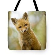 Red Fox Kit Up Close Tote Bag
