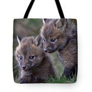 Red Fox Kits Tote Bag