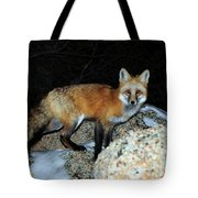 Red Fox - Piercing Eyes Tote Bag