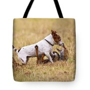 Red Fox Playing With Jack Russell Tote Bag