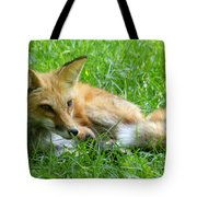 Red Fox Resting Tote Bag
